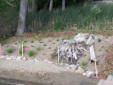 Shoreline erosion protection installed and planted